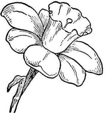 Plantillas De Flores Defloresonlinecom