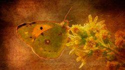 fondo de escritorio mariposa