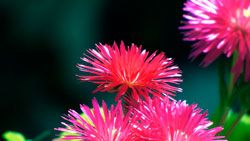 fondo petalos rosados