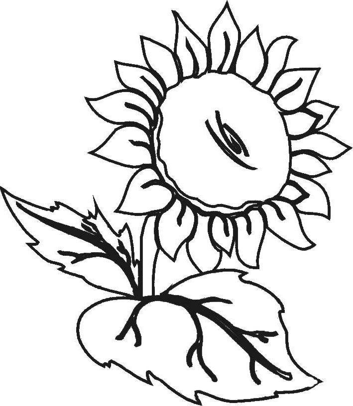 Mariposas Recicladas besides Cuadros De Flores Grandes as well 2 additionally Las Rosas Y Girasoles En Pinturas De as well Dibujos Principales Flores Hechas Lapiz. on girasoles para pintar