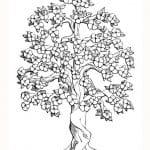arbol de cerezo dibujo