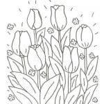 dibujo de tulipanes