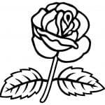 dibujo flor de rosa para pintar