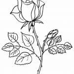 dibujo para colorear de rosas