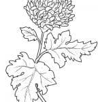 dibujo flor de cempasúchil