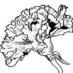flor de clavel para colorear