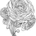 colorear flor de peonía