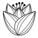 flor de tulipan para colorear
