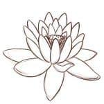 flor de ren