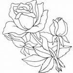 plantilla de rosas para calcar