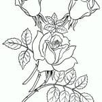 dibujo de ramillete de rosas para pintar