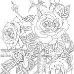 rosal dibujo