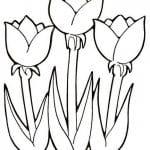 flores de primavera para colorear tulipanes