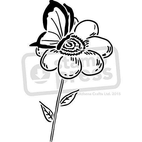 Starcir A3 mariposa en flor