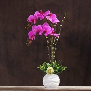 Moderno centro de orquídeas