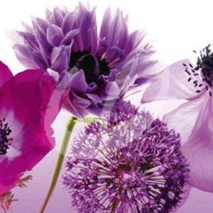 Póster flores moradas