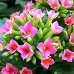 20 Flores de Interiores y sus cuidados