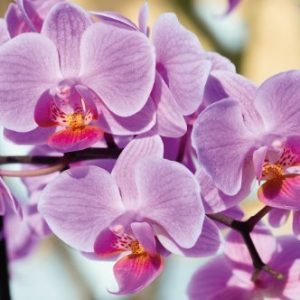 Mural de papel de orquídeas