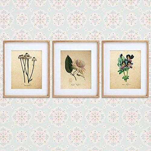 láminas de botánica INFUSION
