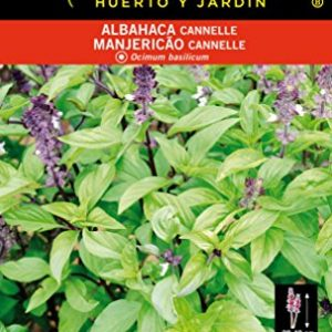 Albahaca Cannelle
