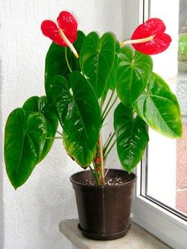 20 plantas de interiores y sus cuidados la selecci n m s for Plantas de interior muy duraderas