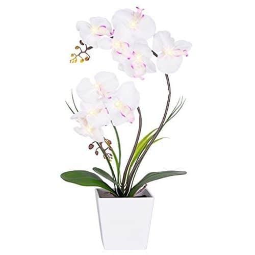 Macetas con flores defloresonline com - Maceta para orquideas ...